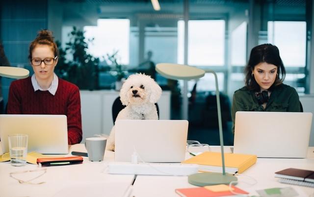 Как вести себя на собеседовании, чтобы попасть на работу в международную компанию — советы от amazon
