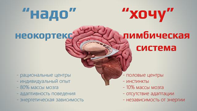 Как получить профессию будущего и при чем здесь неокортекс — мнение