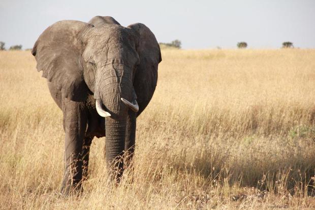 Как продать слона? 5 правил эффективного продавца